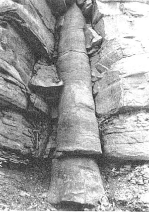 Fossil tree trunk