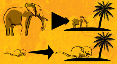 diagram showing elephants becoming smaller and shrews becoming bigger