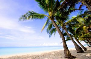 beach with coconut trees