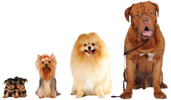 Dogs of various breeds sitting in a line