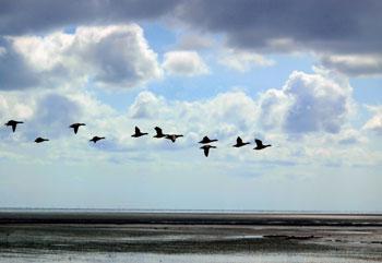 Unele animale au abilitati extraordinare si instincte de migratie. Dar cat de mult ne ajuta aceasta sa aparam relatarea despre potop?