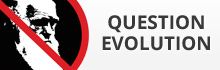 Evolução da Pergunta