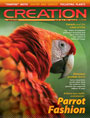 <em>Creation</em> magazine assorted back issues